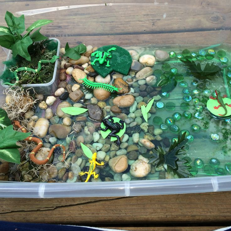 Swamp sensory bin Everything is