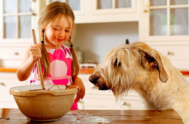 ricette biscotti per cani