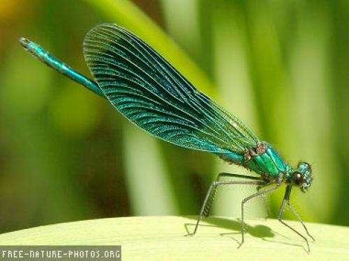 groene libelle foto 's beeld