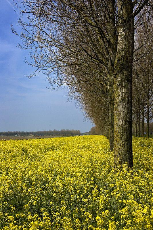 Almeerderhout, Almere, Flevoland.