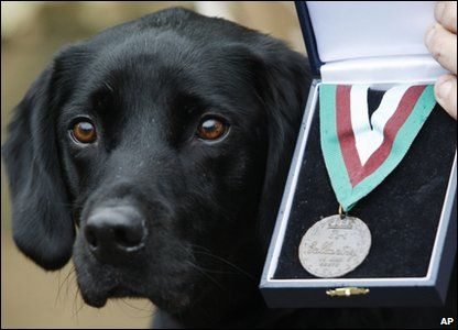 Army search dog Treo has been honoured with a PDSA Dickin Medal for saving lives in Afghanistan.
