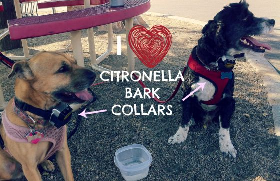 I LOVE citronella bark collars! A humane and effective way to stop your dog from barking.