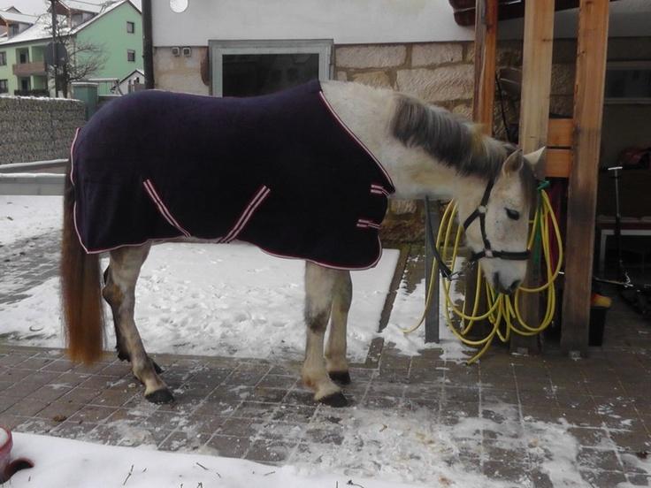Ronja vom Sonnenhof Eltmann mit der neuen Horze Fleecedecke