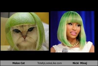 Melon Cat looks like Nicki Minaj