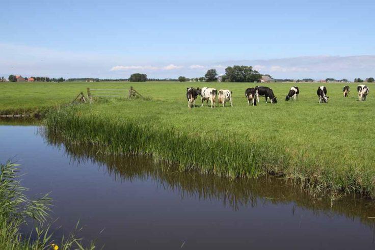 Water, koeien, groen, lucht.