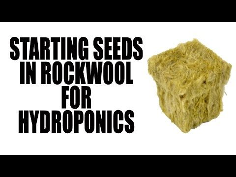 how to start seeds for aquaponics
