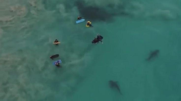 Intentaba tomar fotografías de la costa con su dron. Se encuentra con niños en una aterradora escena