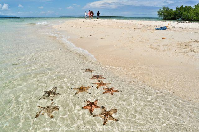 starfish island honda bay palawan - Google Search