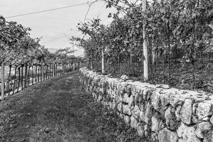 Although the #grape is gone, our Rafaèl #vineyard is always fascinating! ©2014 @ivanomercanzin Photography