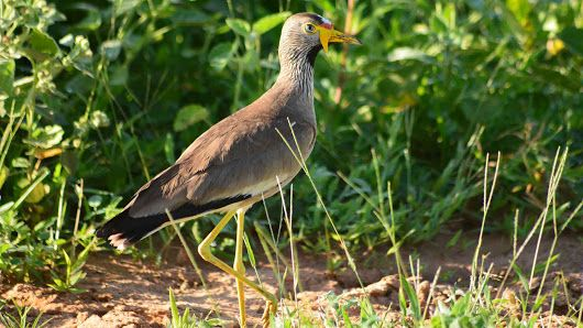 If you love birds then you need to try out a bird watching holiday Africa version. You will get to see numerous diverse species of birds not seen in the Western countries