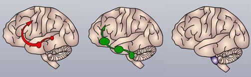 1. Mielihyvän tunne syntyy, sillä alkoholi edistää välittäjäaine dopamiinin eritystä. Dopamiinipurkaus virtaa aivojen mielihyväkeskukseen. 2. Alkoholi vaikuttaa myös aivojen serotoniinijärjestelmään, mikä saa olon tuntumaan miellyttävältä ja mikä saa myös muut ihmiset tuntumaan läheisimmiltä. 3. Alkoholi vaikuttaa hengitystiheyttä säätelevään ydinjatkokseen.