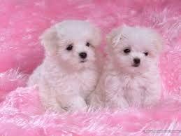 imagenes de perritos bebes - Buscar con Google