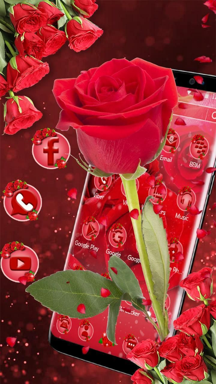 Tema Bunga Mawar Merah : bunga, mawar, merah, Gambar, Bunga, Mawar, Merah, Untuk, Wallpaper, Cantik,, Bunga,