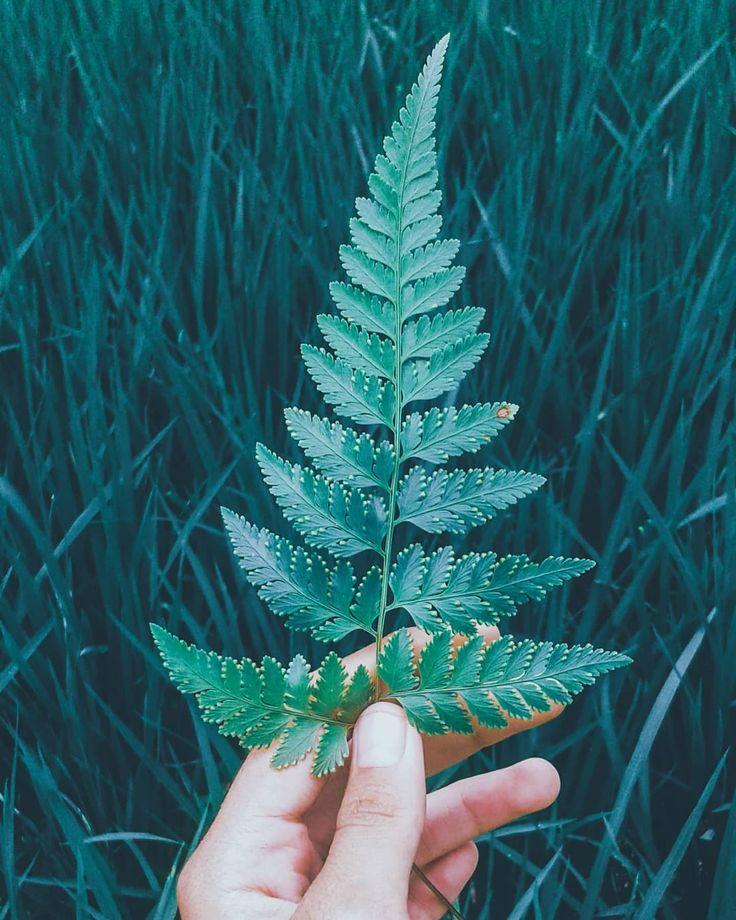 Sering sering melihat kebawah maka makin sering kita bersyukur  #bismillah #muslimah #quotes #nature #leaf #green #picoftheday #gogreen #instagram #instanmood #instagrammers #summer #instanice #indonesia #jawabarat #sukabumi #goodmorning #morning #lfl #likeforlike #followforfollow #pictureoftheday #picture #dark #beautiful #senin #semangatpagi #photography #photo