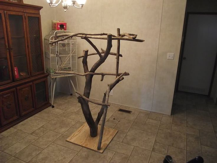 Best 28 how to make a bird perch diy bird play stand for How to build a bird stand