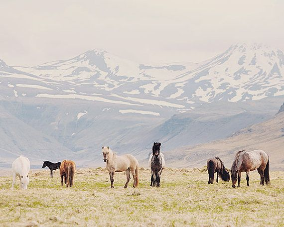 Icelandic Horses Against a Mountain Landscape, Nature Photography, Pastel Wall Decor - All the Pretty Horses $30 easy