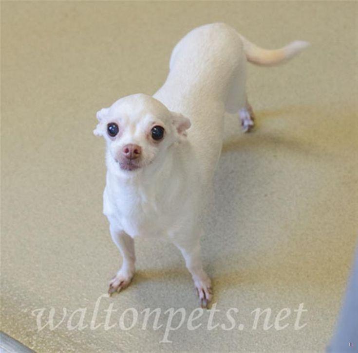 Found Dog - Female  - #Monroe, #GA, USA 30656 on December 29, 2017 (13:00 PM)  HeLP ID: 2120196 #Georgia