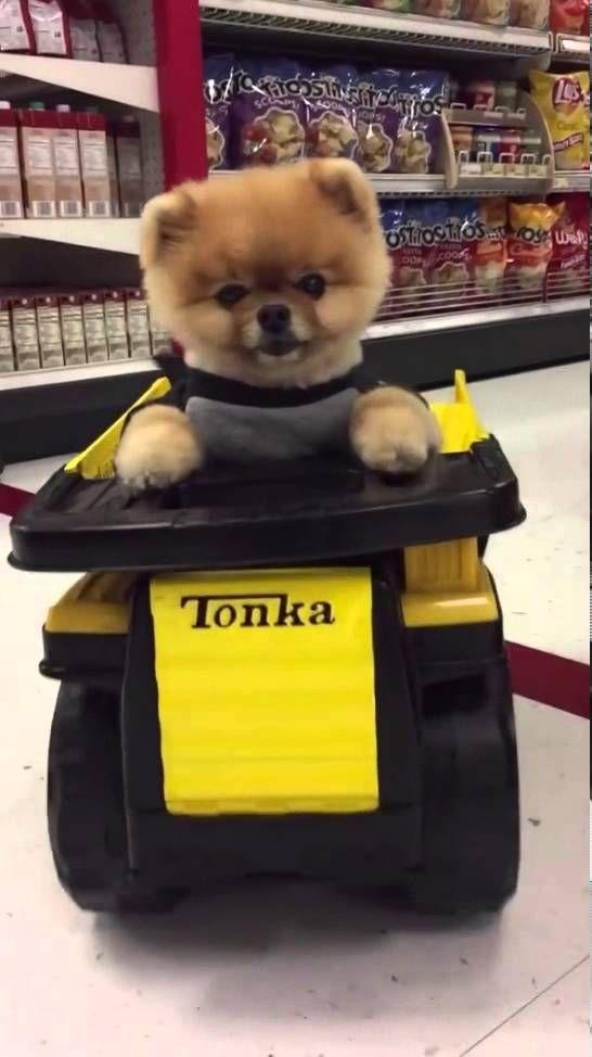 Jiff | Dog ► Funnies Dog 2016 | Jiff Fail 2016 | Cute animals | New funn...
