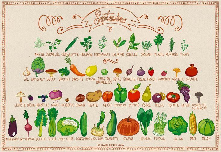 Fruits et Légumes de Septembre  Liste des fruits et légumes de saison via fruits-legumes.org Illustration par Pissenlit au Jardin #LégumesSaisons