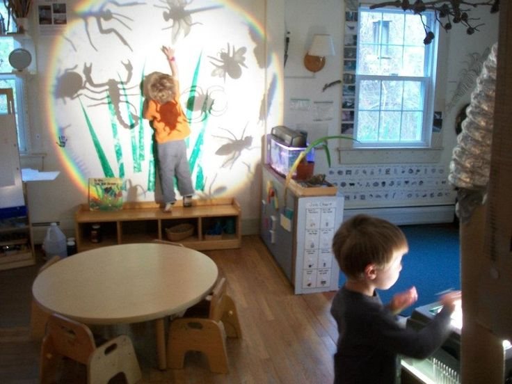 Exploring Bugs with Light and Shadow (to Go Along With Book, In the Tall, Tall Grass)