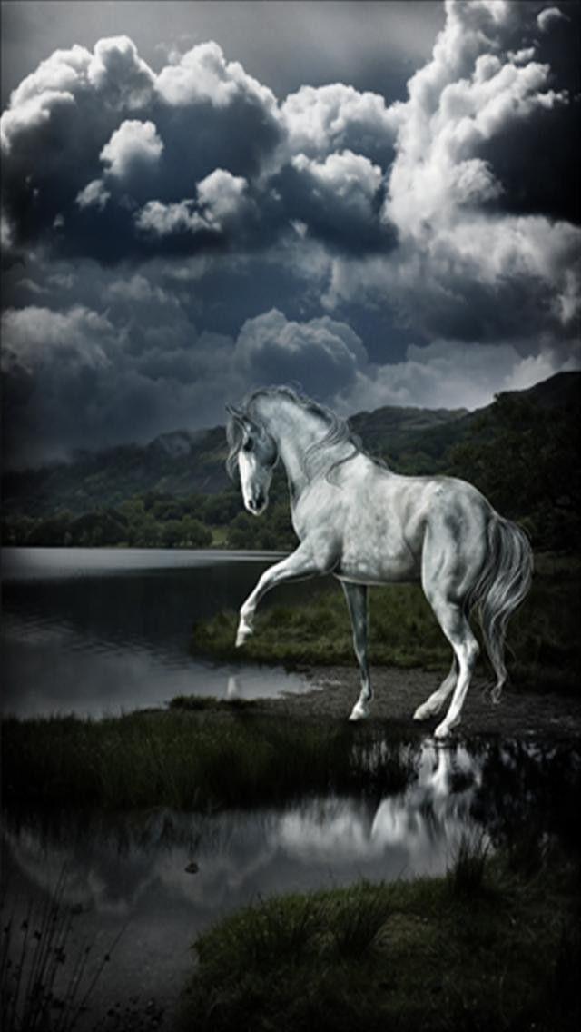 Beautiful White Horse Beautiful Horses Horses Horse Inspiration