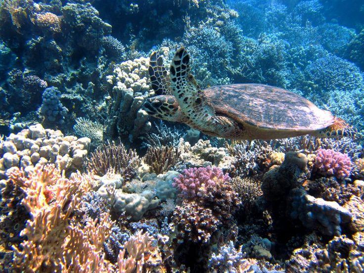 tortugas domésticas