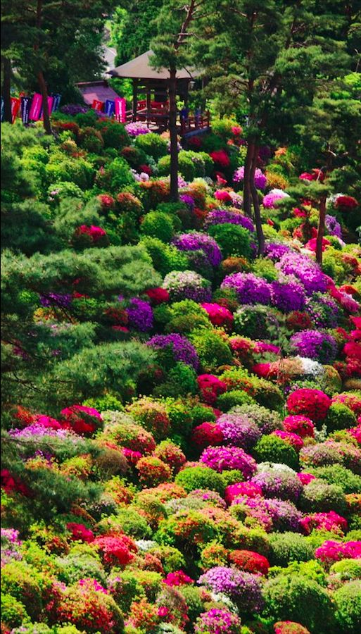 Azaleas at Shiofune Kannon Temple in Tokyo • photo: Amelida Fernandez martinez on Flickr