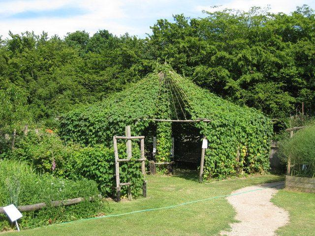The 25 best ideas about hops trellis on pinterest hops for Hops garden designs