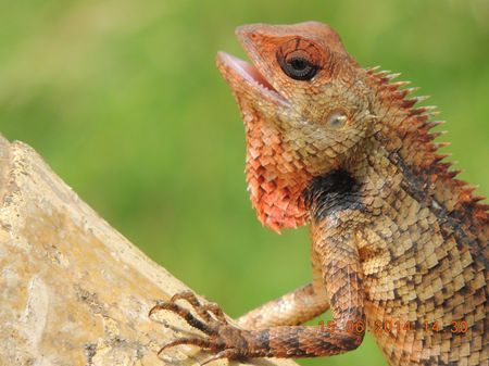 The Chameleon Photo by Nilesh Shah -- National Geographic Your Shot