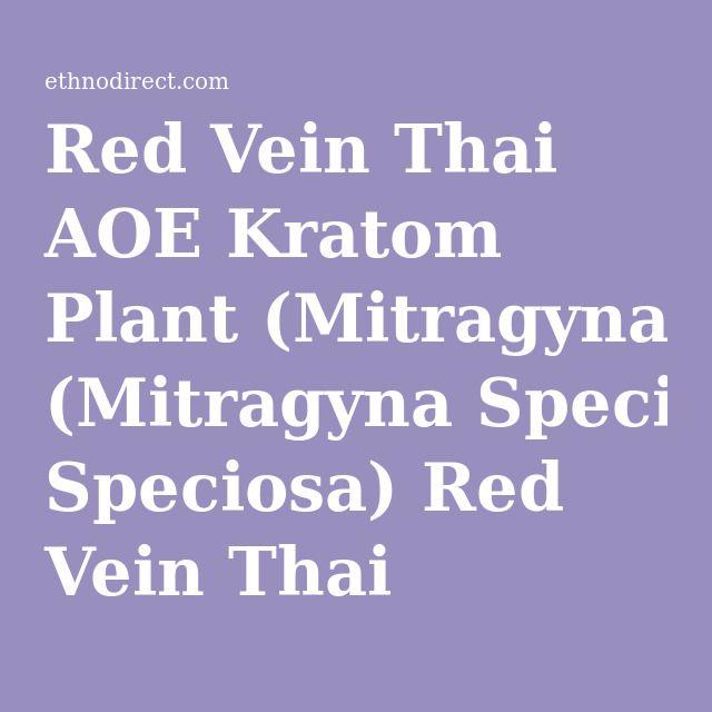 Red Vein Thai AOE Kratom Plant (Mitragyna Speciosa) Red Vein Thai Kratom Plants For Sale : EthnoDirect.com, One Stop Ethnobotanical Plant Shop