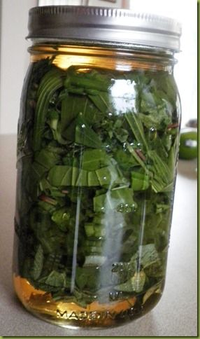 Poison ivy remedy/made from common plants - this one is done in vinegar, but I have also used olive oil. it really does work!