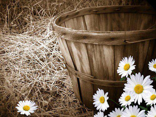 Çiçek & PapaTya