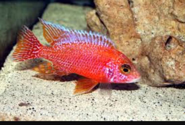 Aquarium Fish For Sale