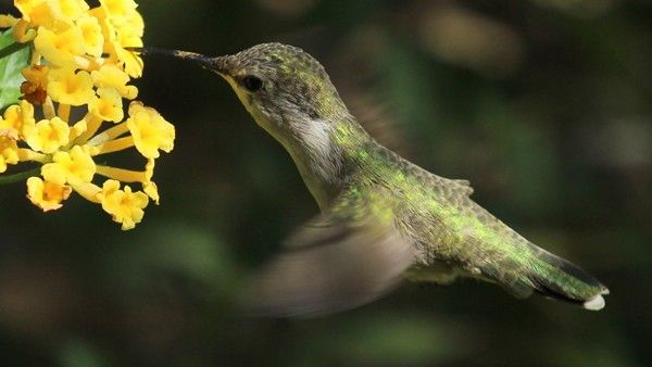 Hummingbird - Worth1000 Contests - 1st place (out of 16) - Beginner: Flight 2014