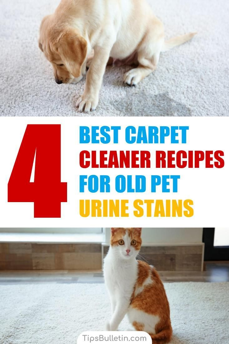 4 Best Carpet Cleaner Recipes For Old Pet Urine Stains Pet Urine Pet Carpet Cleaners Cleaning Pet Urine