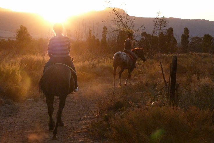 Sunset Horse Trails in the cape winelands
