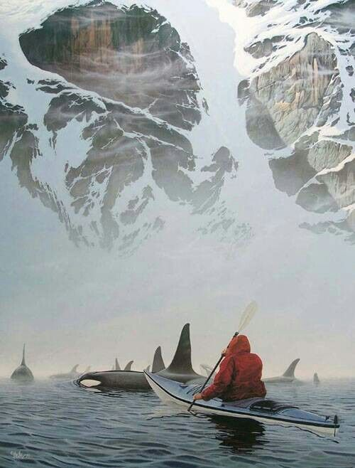 """""""Kayak with orcas at Johnstone Strait off Vancouver Island, British Columbia, July-September."""""""