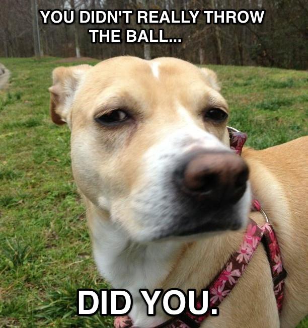 Skeptical dog is skeptical.