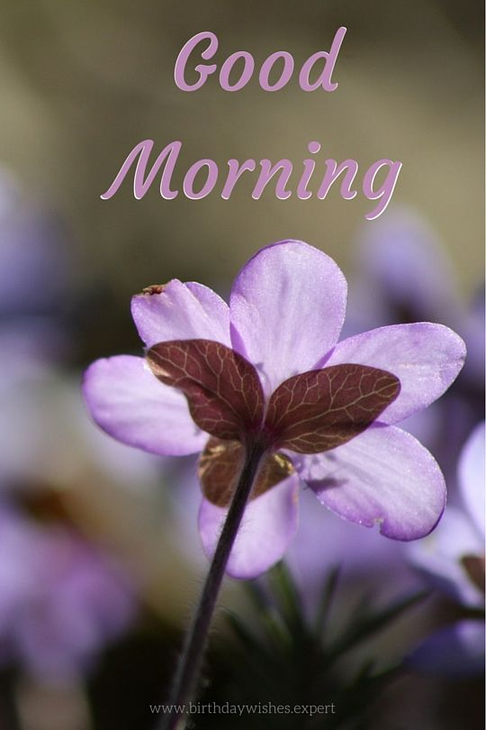 Best 25+ Morning Images Ideas On Pinterest