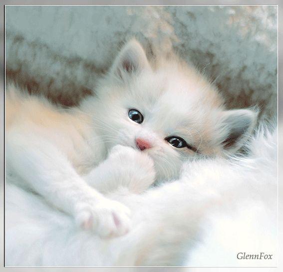 Blog de edlweiss :***Ici ou ailleurs...Va ou le vent te mène...Vaa..}, Le chat et le soleil