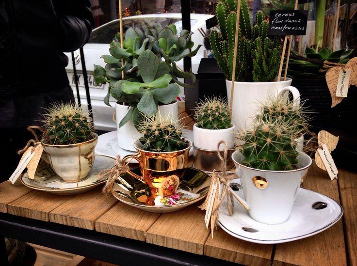 cactus, cacti, coffeecup, antique