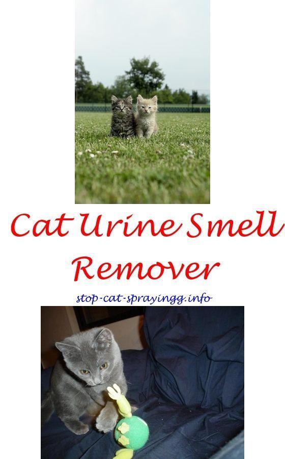 Cat Pee Deterrent Spray Cat Urine Stop House Best Way To