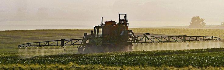 Dit bikkelharde oordeel hebben rechters zojuist over Monsanto geveld - http://www.ninefornews.nl/bikkelharde-oordeel-rechters-monsanto/