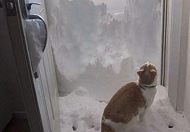 6-Feb-2015 5:25 - DAPPERE KAT GAAT CONFRONTATIE AAN MET BERG SNEEUW. Toen deze overmoedige kat meer dan een meter sneeuw voor de deur zag liggen, bleef hij niet bij de pakken zitten. Vastberaden begon het huisdier...