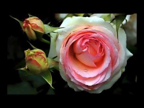 Linda Música Tradução românticas traduzidas Michael Bolton all for love lançamento novembro de 2014 - YouTube
