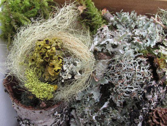 Secco muschio e licheni foresta prodotto per di MelroseBotanicals