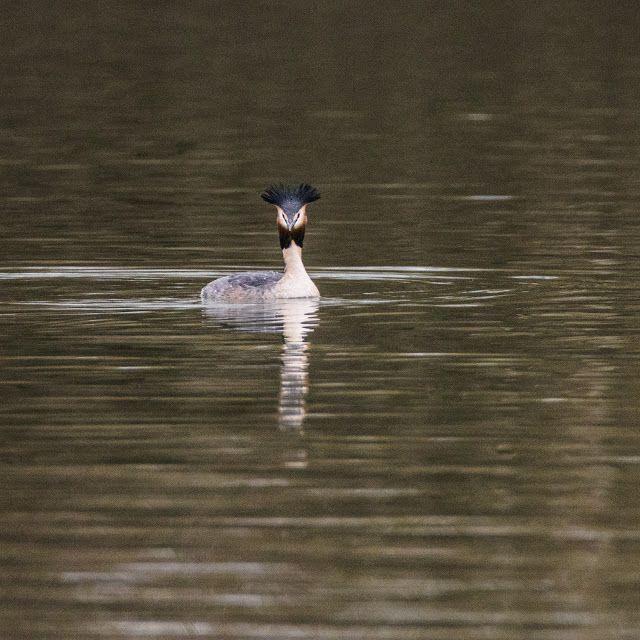 Claes`s Photo blog: water birds
