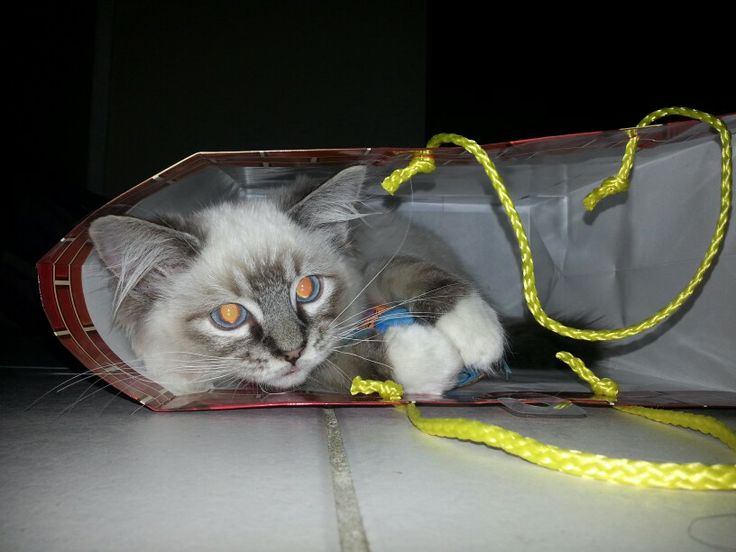Me in a gift bag.