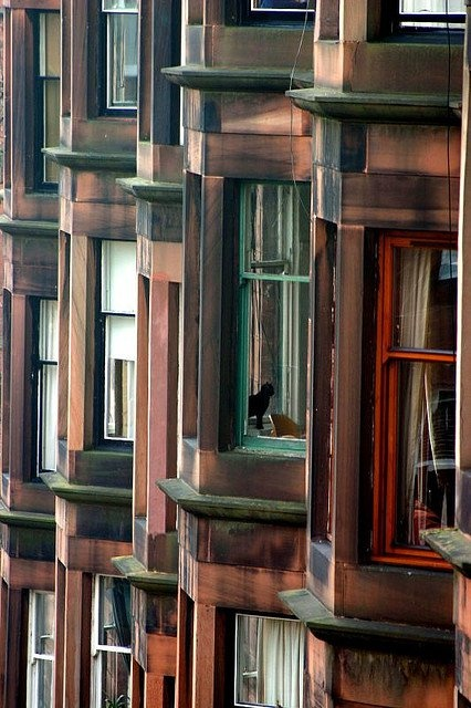 Tenements are huge inside, just think of the tardis. Can you spot the two cats in this photo?