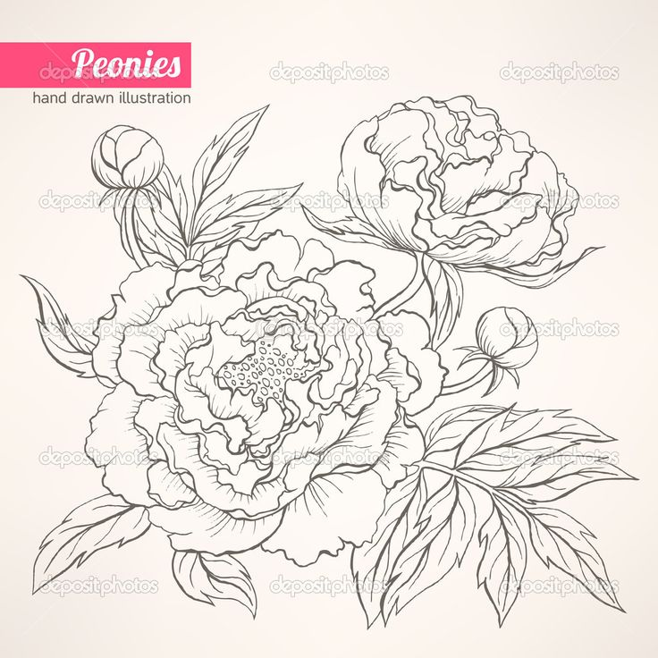 Illustration Of Beautiful Hand Drawn With Peony Bouquet On A Beige Vector Art Clipart And Stock Vectors